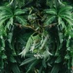 君璦 Queens Wedding