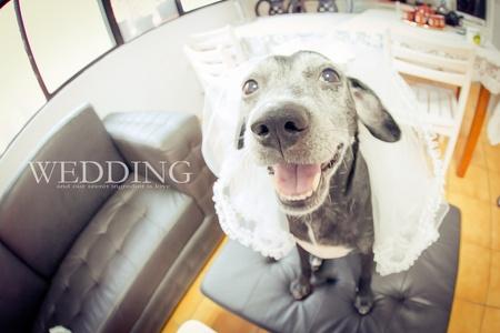 【婚禮記錄】- 愛我就要娶我噢!